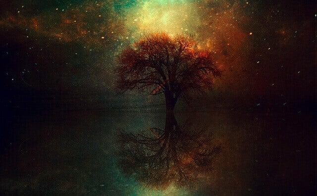 Reflektion av träd