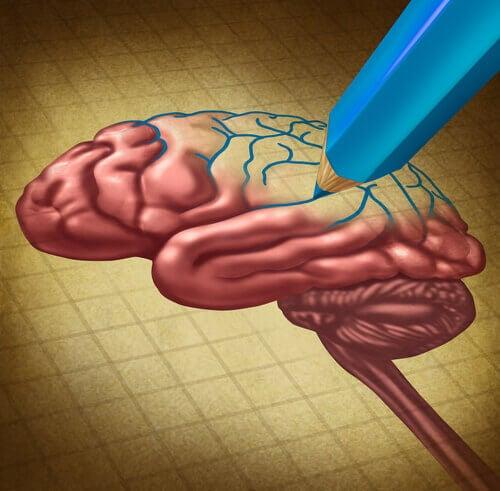 Ritad hjärna
