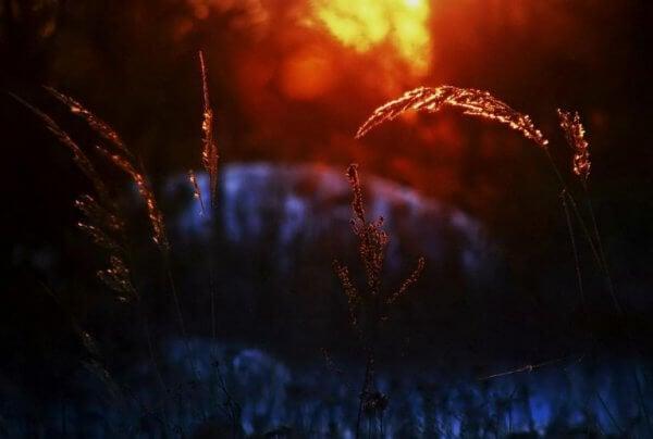 Säd i solnedgång