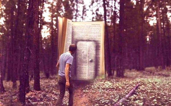 Bok i skogen