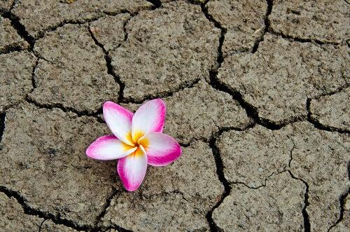 Blomma under torka