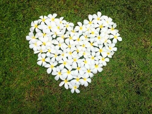 Blommor bildar hjärta