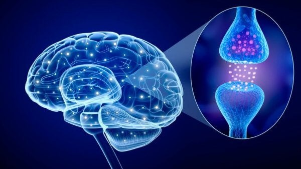 Neurotransmittorer i hjärnan