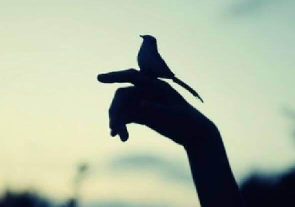 Fågel på hand