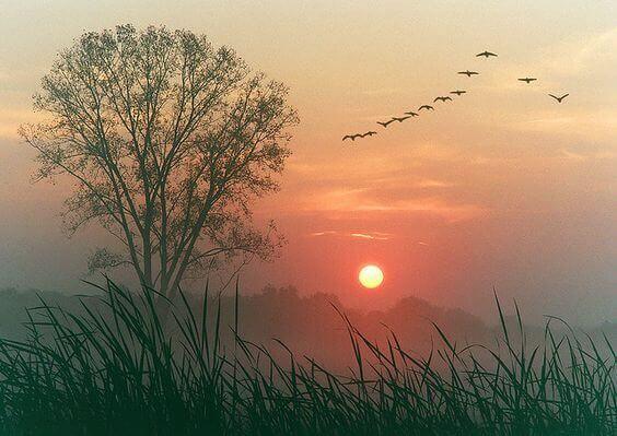 Fåglar i formation