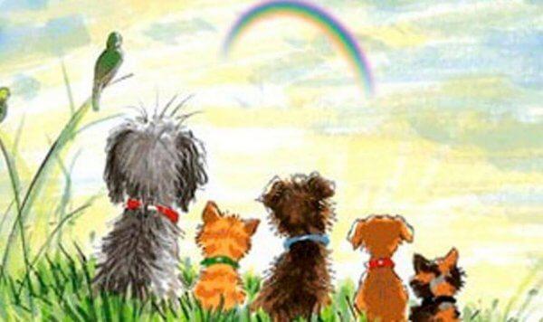 Hundar tittar på regnbåge