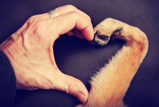 Kärlek till djur