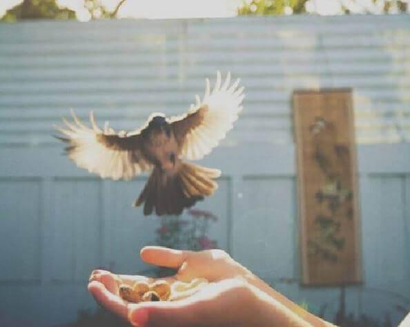 Var fri som en fågel