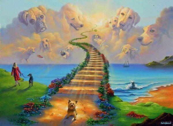 Legenden om regnbågsbron: viloplatsen för våra husdjur