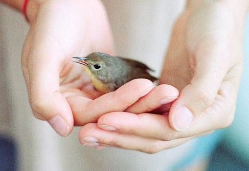 Altruism höjer upp dig