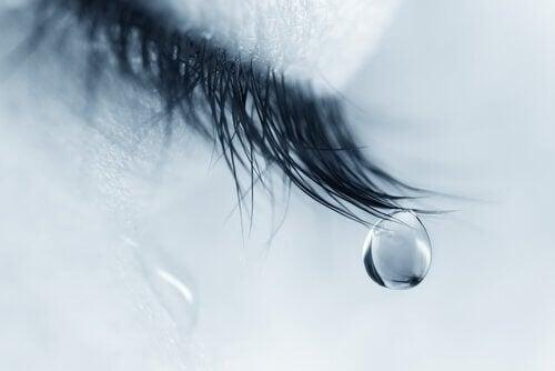 Tår på ögonfrans