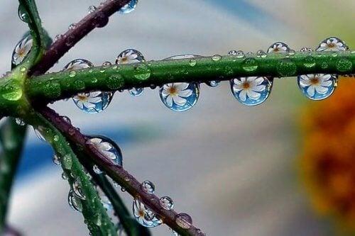 Daggdroppar på växt