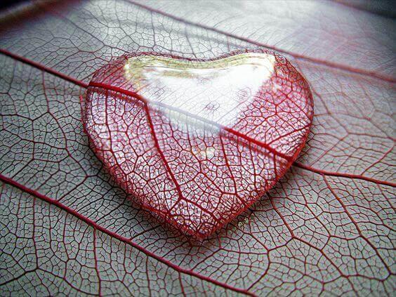 Hjärta på löv