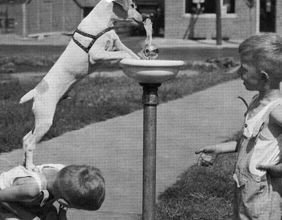 Hund som dricker från fontän