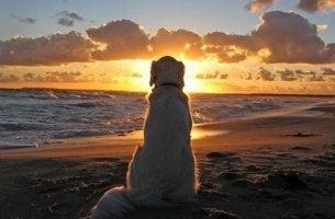 Hundar kan lära oss saker om livet