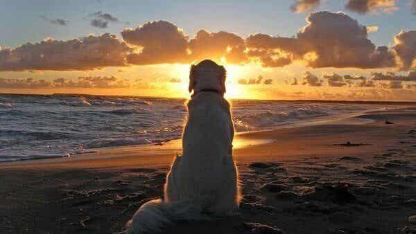 Vad hundar kan lära oss om våra problem