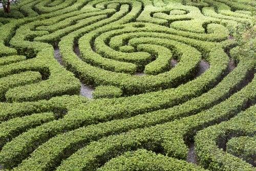 Labyrint med kurvor
