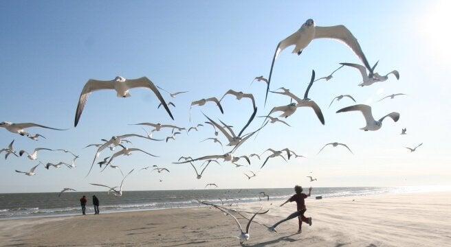 Måsar på strand
