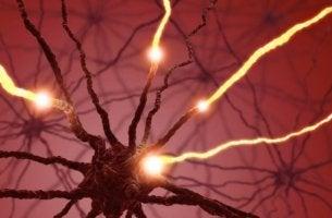 Serotonin påverkar kroppen