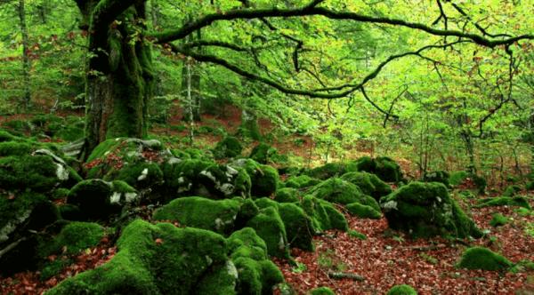 Skogsbad: Ett effektivt motgift mot stress