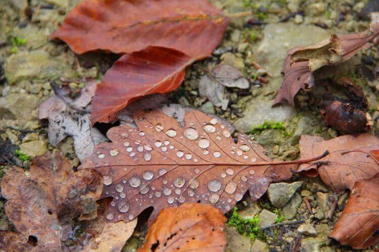 Våta löv på marken