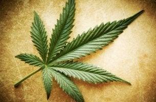 Myter om marijuana