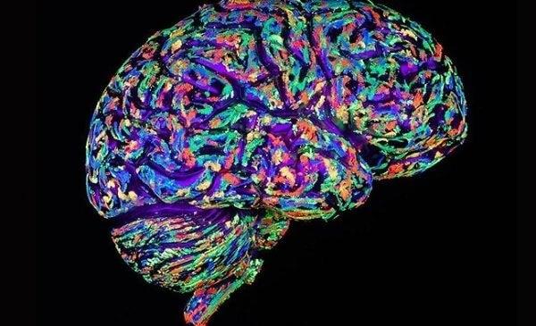 Tvärsnitt av hjärna