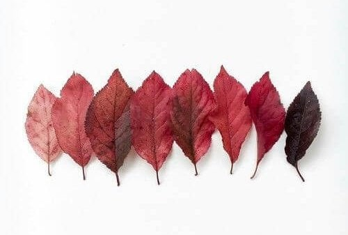 Löv i olika färger