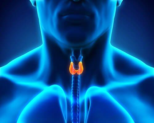Vad händer i kroppen vid sköldkörtelproblem?