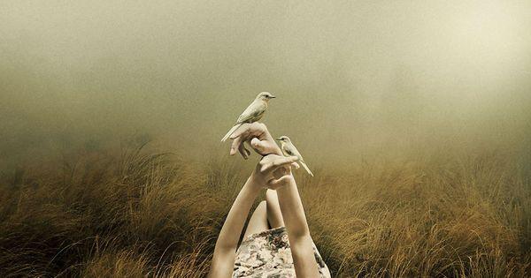 Fåglar som sitter på händer