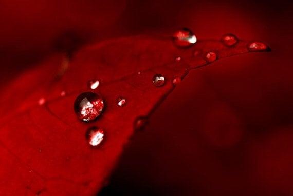 Droppar på rött löv