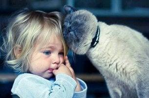 Fördelarna med katterapi