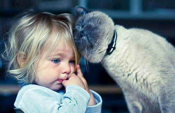 Katterapi: 5 fördelar med att leva med katter