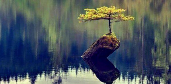 Motståndskraftigt träd i sjö
