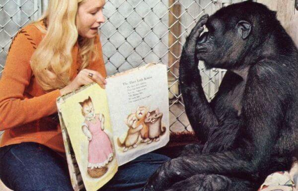 Sagostund för Koko
