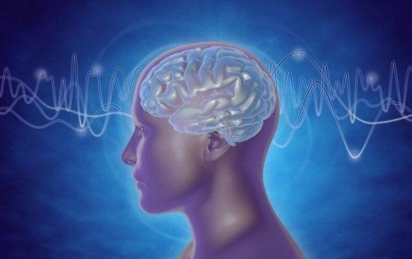 Typer av hjärnvågor
