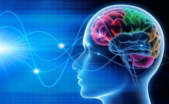 Hjärnvågor: delta, theta, alfa och gamma