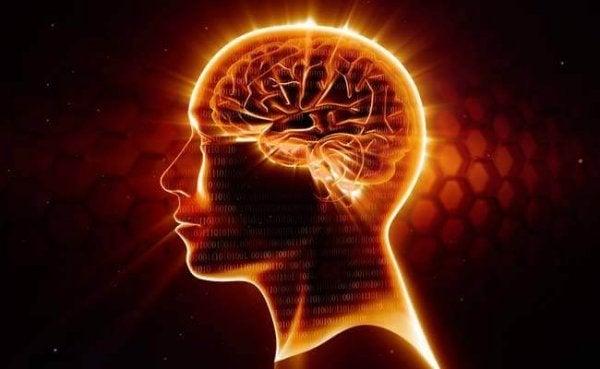 Omega-3: hjärnans bästa försvar