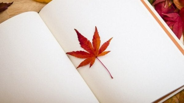 Löv i bok