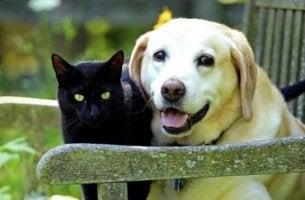Att sörja ett husdjur