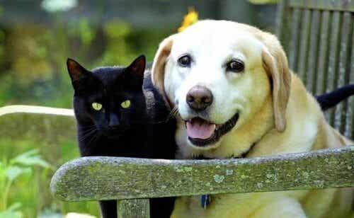 Att sörja ett husdjur: förlusten av en djurvän
