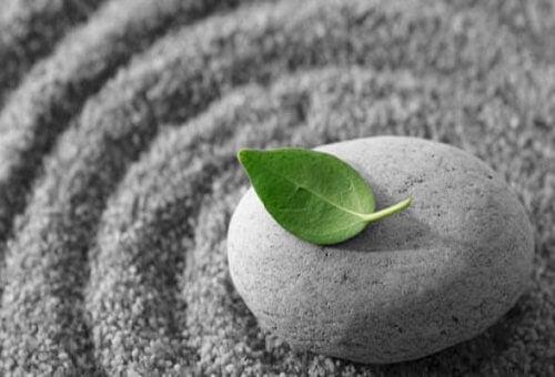 Blad på sten