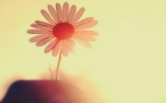 Blomma i solsken