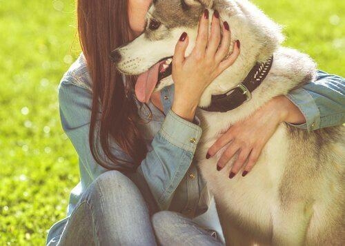 Djur kan trösta