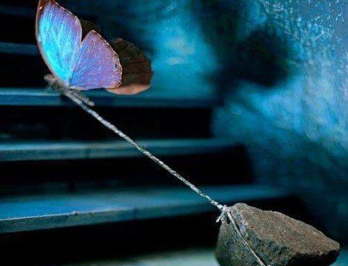 Fjäril drar sten