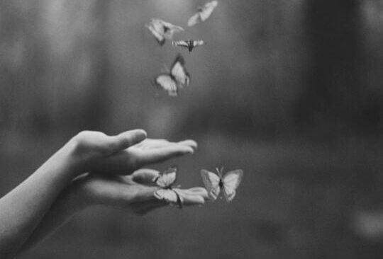 Flygande fjärilar