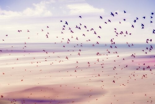 Fria fåglar