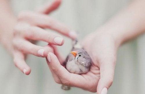 Liten fågel i hand
