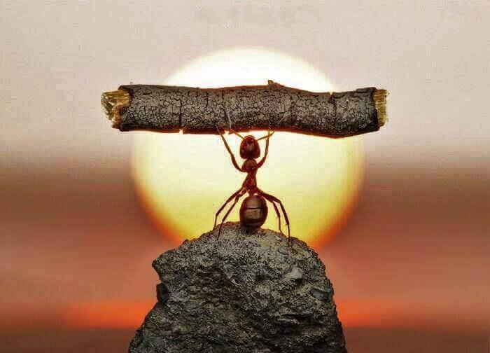 Myra som lyfter kvist