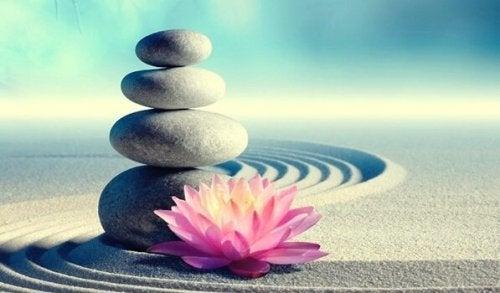 Budord från zen som kommer förändra ditt liv